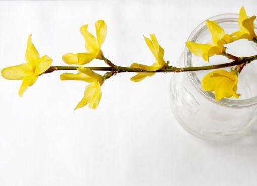 flores amarillas 3 para blog