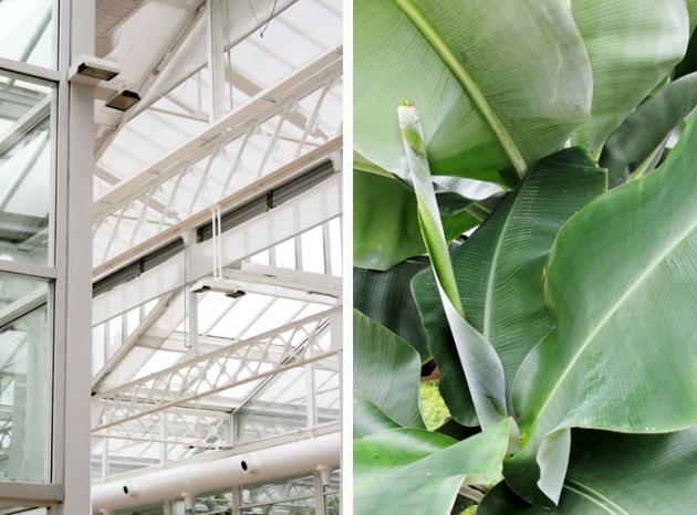 Arquitectura y Plantas en el Invernadero de Madrid Rio