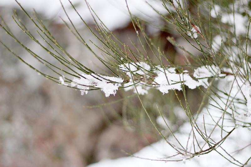 Fotografiar el invierno - Detalle árbol nevado