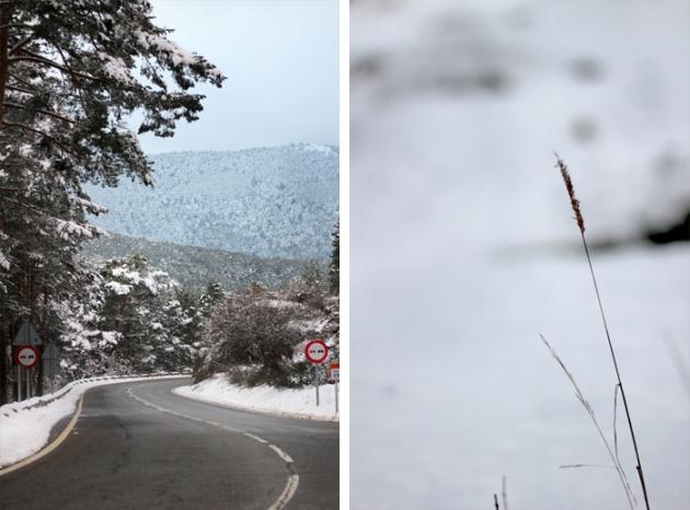Fotografiar el invierno - detalles naturaleza y paisaje nevado