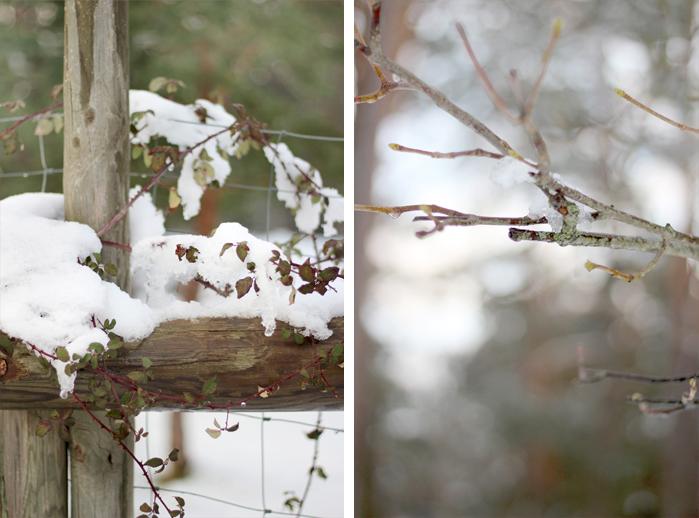 Fotografiar el invierno - detalles naturaleza nevada
